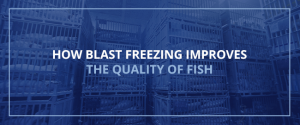 How Blast Freezing Improves the Quality of Fish